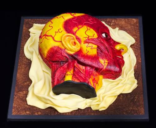 Wax Anatomy Model Cake Boing Boing