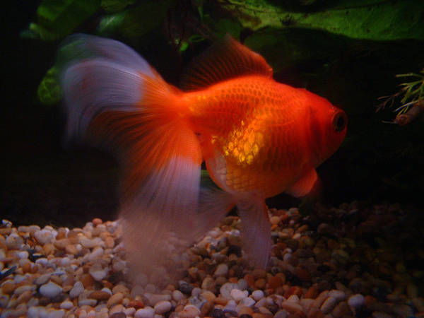 High security first pet naming guidelines boing boing for Peces de acuario