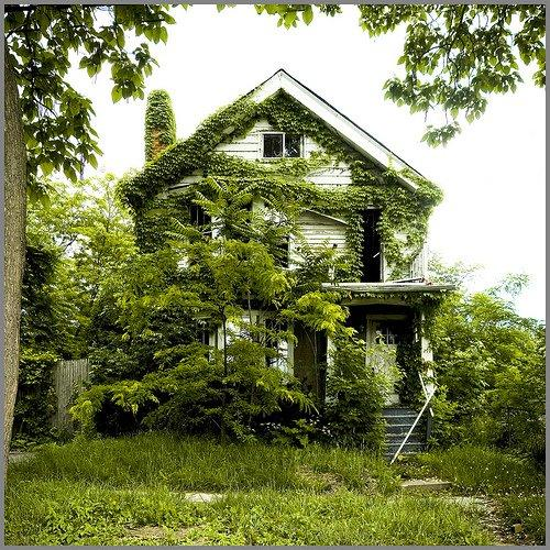 Detroit houses being eaten by nature boing boing for Old deep house