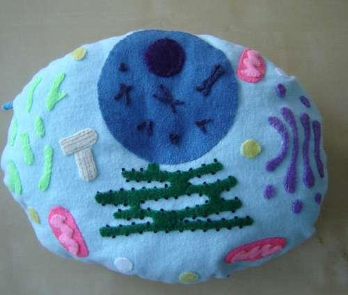 Instructables user ChrysN has a sweet plush cell model HOWTO up on the site.