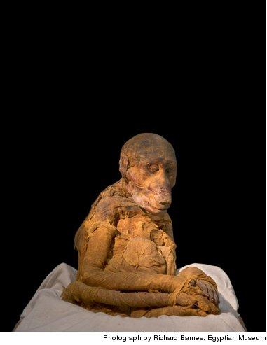 an analysis of mummies in egypt The burial site contains the mummy of a high priest of thoth—the ancient egyptian god of science, magic and writing— whose preserved organs are contained in jars.
