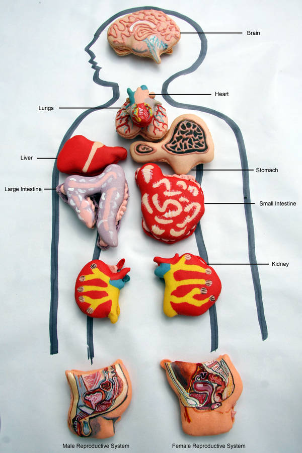Wide Variety Of Human Innards In Delicious Macaron Form