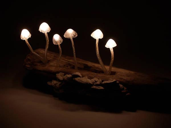 Mushroom Led Lamps Driftwood Boing Boing