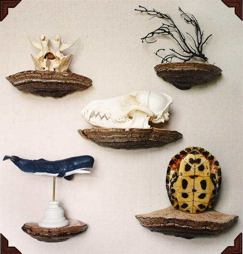 Поделки из гриба трутовика