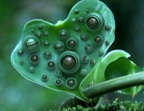 alien plant2