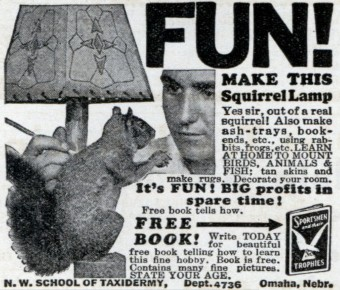 Squirrelllamp