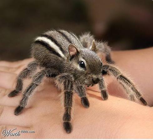 Horrifying Cute Animals Photoshopping Contest Boing Boing